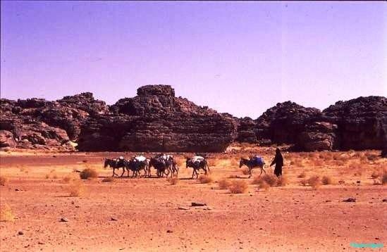 Donkey train, Djanet Algeria