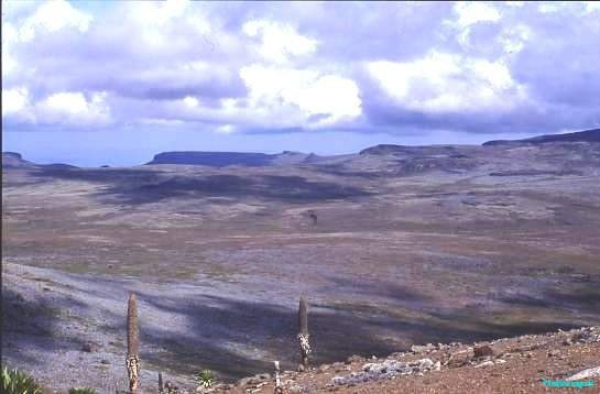 Bale National Park, Ethiopia, giant Lobelia