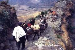 Mule jam descending toward Lalibela ©Robin Callender-Smith
