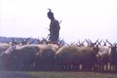 Puszta shepherd