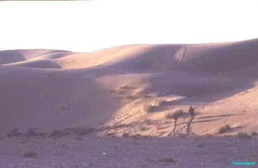 Lone figure on dunes, Tadna, Rajasthan