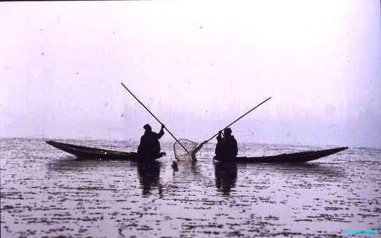 Fishermen, Dal Lake, Kashmir
