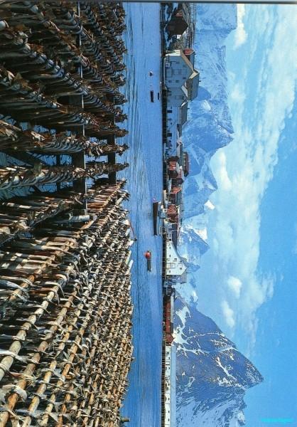 Lofoten fisheries, Hamnoya