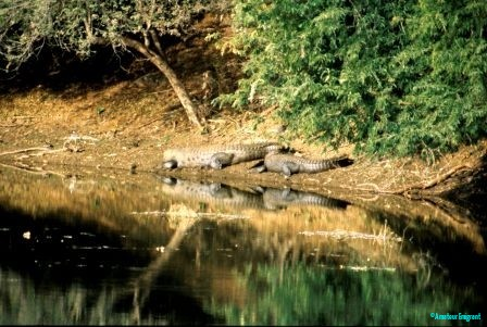 crocs-ranthambore