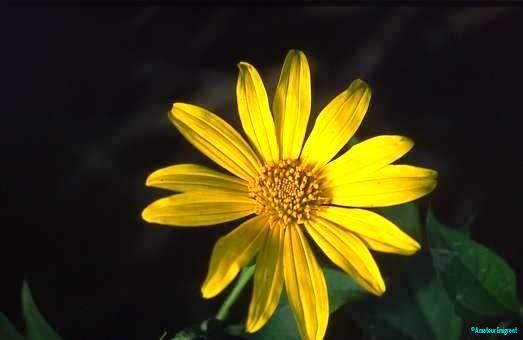 Yellow flower; please advise