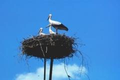 storks-hungary