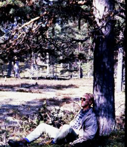 Daydreaming under a tree in the Swedish forest