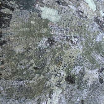 Map lichens on fencepost1