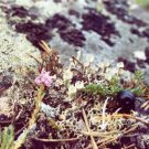 Checking out the micro-scape of lichens, mosses and critters