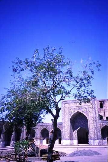 Samarkand view
