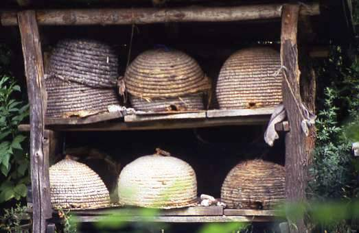 Beehives, Hungary