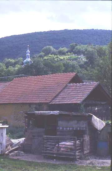Village house with pigs, Hungary