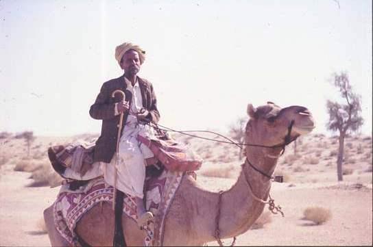Boss camel man, Jaisalmer