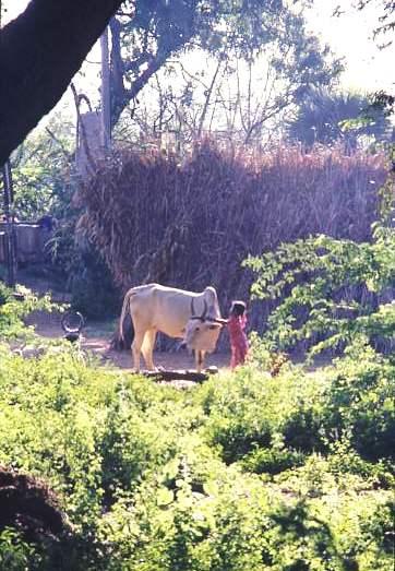 Village life, Tamil Nadu