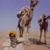 Story behind the Picture #3 The slowest camel in Rajasthan