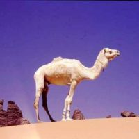 Sahara Central